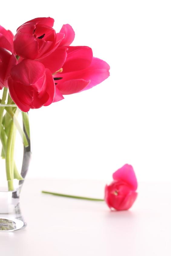 fleur tombée