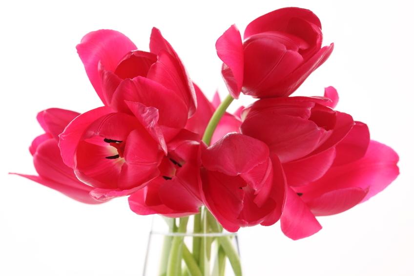 beau bouquet fleurs rouges