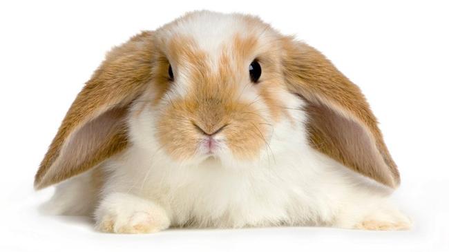maquillage non testé sur les animaux